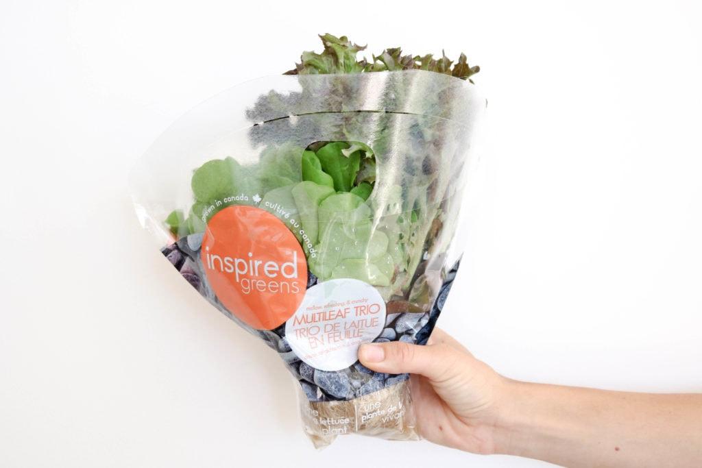 Inspired Leafy Greens Bunch of Multi Leaf Trio