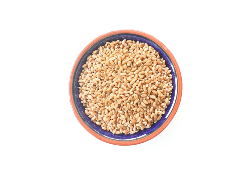 Wheatberries in a blue bowl with brown trim.